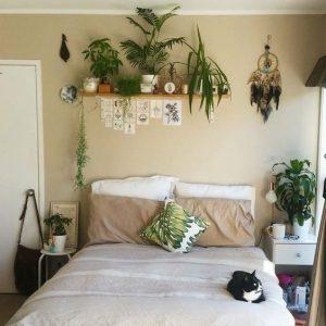 kamerplanten slaapkamer - verschillende soorten