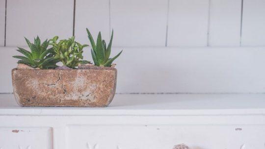 Wat zijn leuke planten om als housewarming cadeau te geven